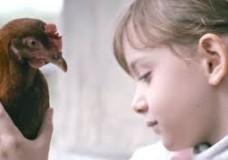 the chicken 4